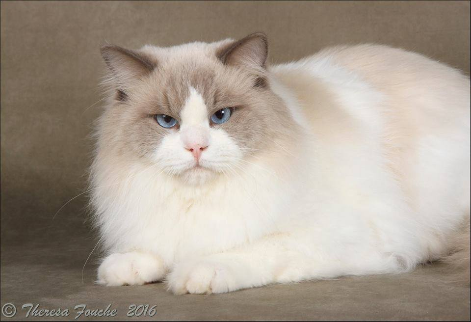 Provincial Cat Society Results 18 – 19 June 2016