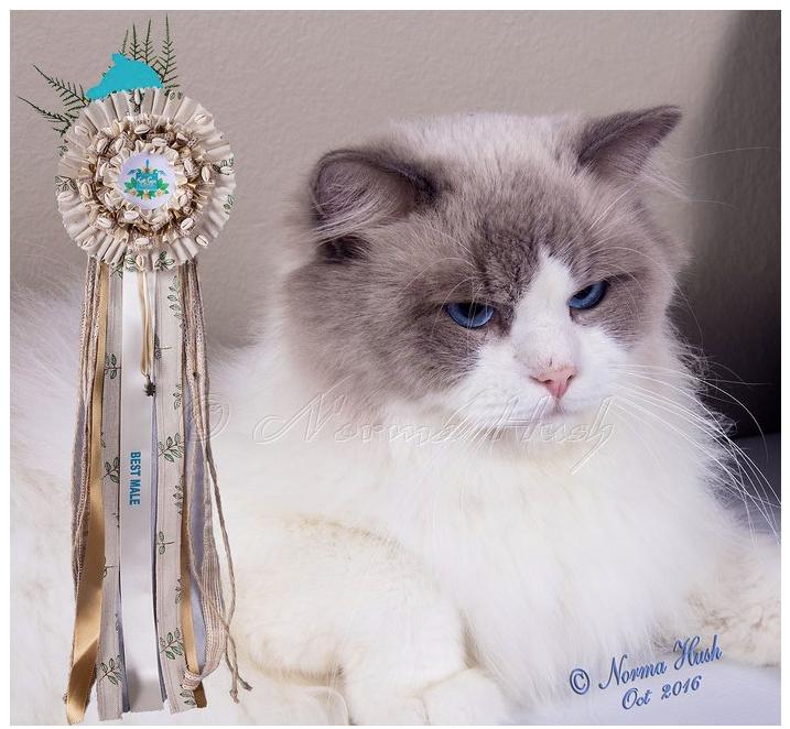 KZNCC Top Cat 2016