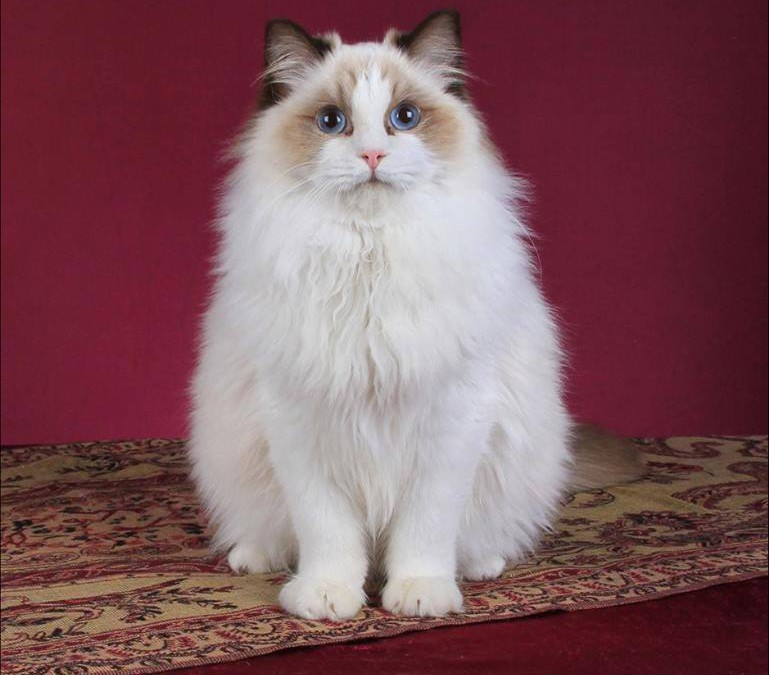 CFSA Cat of the Year 2016