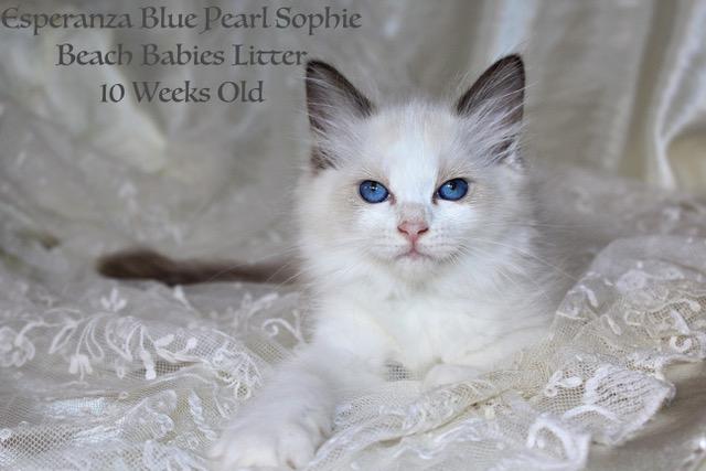 Blue Pearl Sophie
