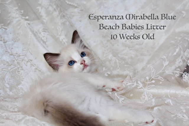 Mirabella Blue