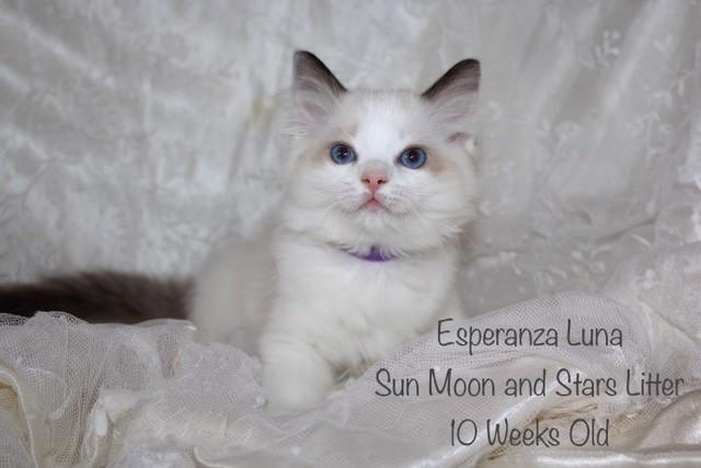 Esperanza Luna