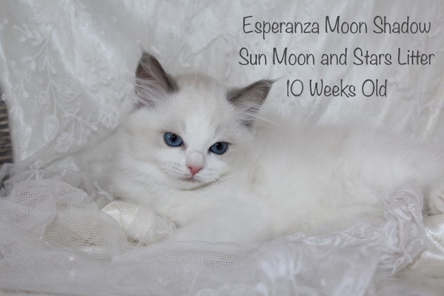 Esperanza Moon Shadow