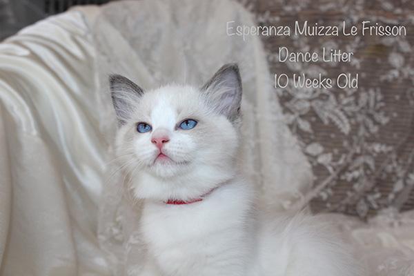Esperanza Muizza Le Frisson