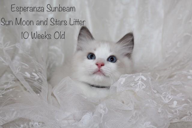 Esperanza Sunbeam