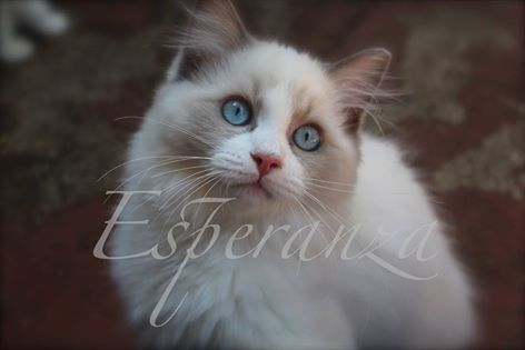 Provincial Cat Society Results 23 April 2016